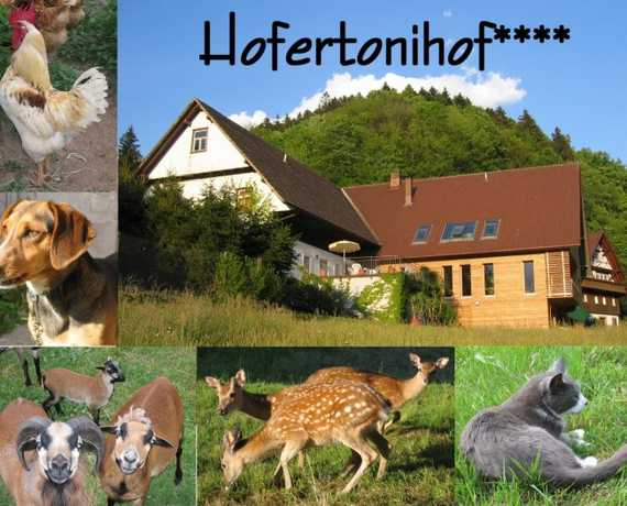 Hofertonihof Bad Peterstal-Griesbach - Bad Peterstal