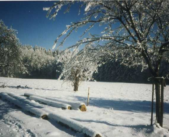 winter Horgenzell - Winterbach