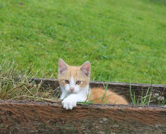 Kater Tommy Bad Peterstal-Griesbach - Freiersbach